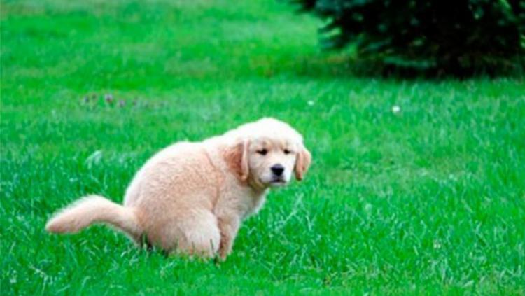 Internautas brincaram com questão sobre fezes de cachorro - Foto: Reprodução