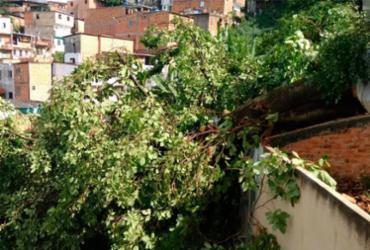 Árvore cai, atinge casas e mata idosa em Luís Anselmo