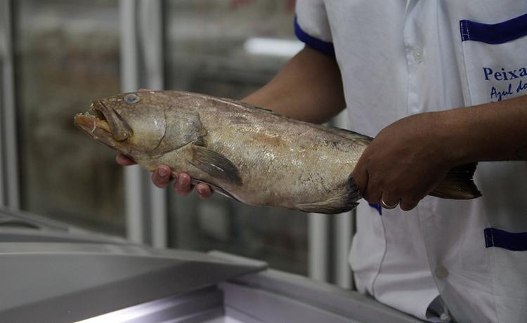 Prefeituras criticam divulgação de informações não comprovadas que atribuem doença a consumo de peixes - Foto: Adilton Venegeroles l Ag. A TARDE
