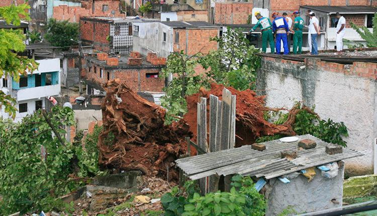 A queda da árvore matou uma idosa - Foto: Edilson Lima | Ag. A TARDE | 02.12.2016