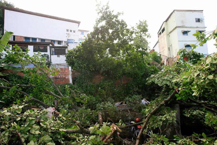 A queda de um Iroko (árvore sagrada) do Ilê Axé Mariolajé matou a idosa na madrugada desta sexta, no Matatu de Brotas - Foto: Edilson Lima l Ag. A TARDE