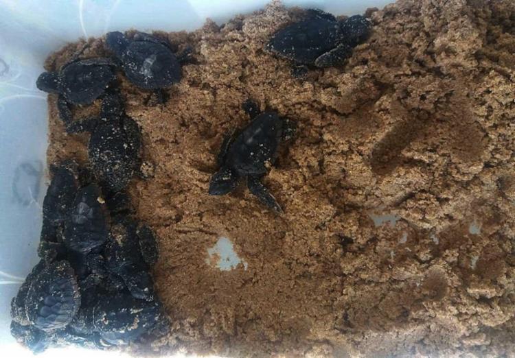 Tartarugas foram achadas na praia da Boca do Rio - Foto: Divulgação | Guarda Municipal