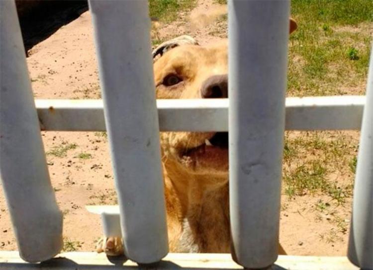 Cachorro foi deixado sem água e comida - Foto: Reprodução | Blog do Braga