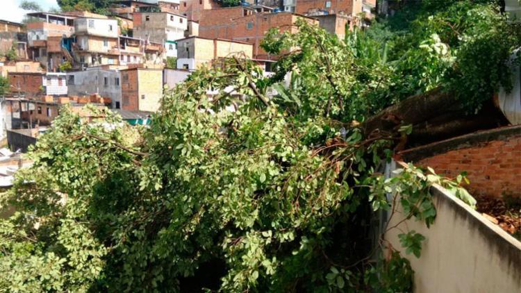 Árvore atingiu quatro casas em Luiz Anselmo - Foto: Edilson Lima   Ag. A TARDE