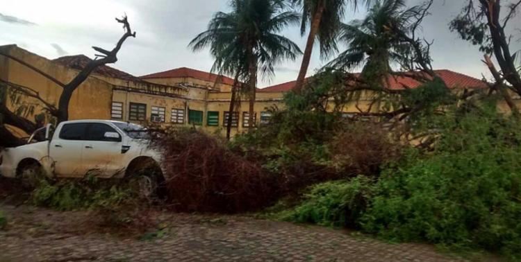 Árvores por toda a cidade foram derrubadas - Foto: Cidadão Repórter | Via Whatsapp