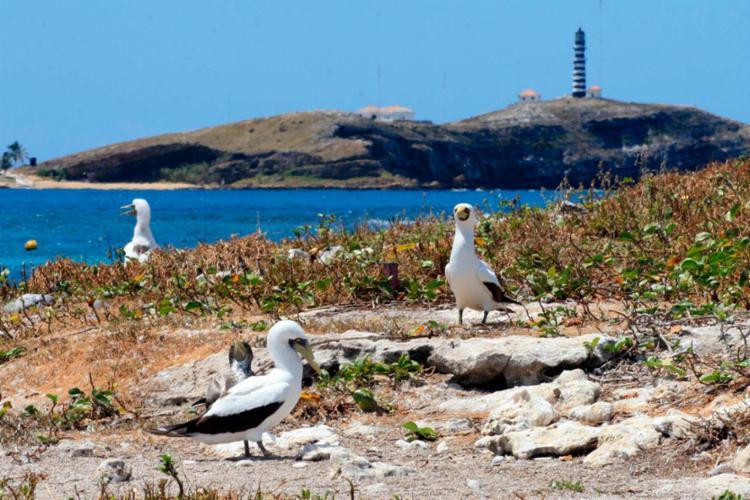 Na imagem, o Parque Nacional Marinho de Abrolhos, no Extremo Sul da Bahia - Foto: Joá Souza | Ag. A TARDE | 10.09.2008