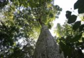 Árvores urbanas testemunham a história da cidade | Foto: