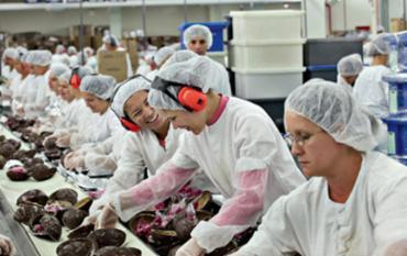 Vagas são para trabalhar no período da Páscoa - Foto: Divulgação | Lacta