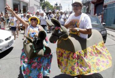 Bloco com jegues leva alegria e irreverência para a Cidade Baixa