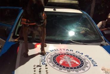 Cadela Diva encontra droga escondida em moita em Porto Seguro
