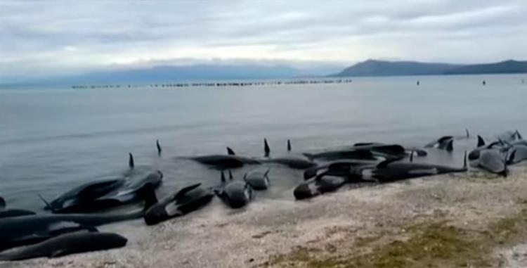 A maioria das baleias não resistiu - Foto: Reprodução
