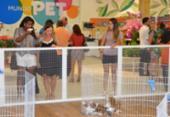 Feira de adoções de animais volta a ser realizada neste sábado | Foto: