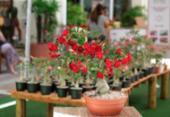 Flores levam clima e perfume da natureza para dentro de casa | Foto:
