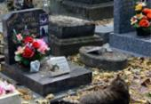 Projeto que prevê criação de cemitério para animais é aprovado e causa polêmica | Foto: