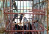 Polícia apreende 65 aves silvestres na Baixa do Fiscal | Foto: