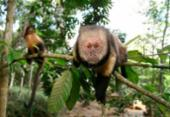 Confirmado primeiro caso de macaco infectado com febre amarela em Salvador | Foto: