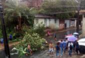 Moradores protestam após árvore cair em uma casa | Foto: