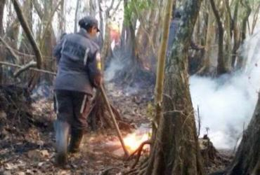 Bombeiros combatem incêndio em área ambiental de Praia do Forte