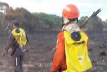 Bombeiros debelam fogo nas imediações das casas em Praia do Forte