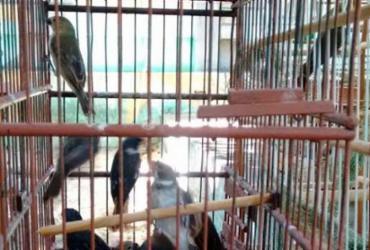 Polícia apreende 65 aves silvestres na Baixa do Fiscal