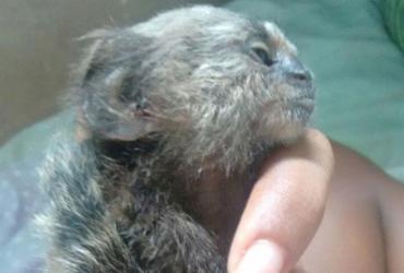 Jovem da Vila Laura encontrou macaco