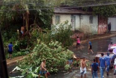 Moradores protestam após árvore cair em cima de uma casa