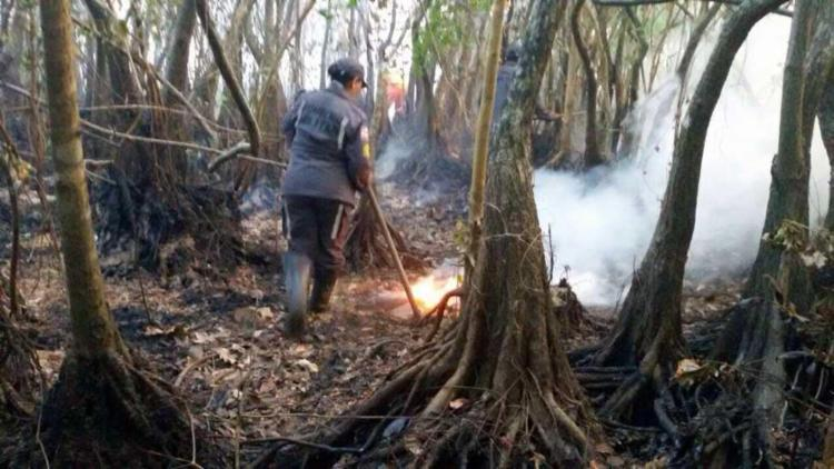 Bombeiros atuam no combate ao incêndio em Praia do Forte - Foto: Divulgação | Corpo de Bombeiros
