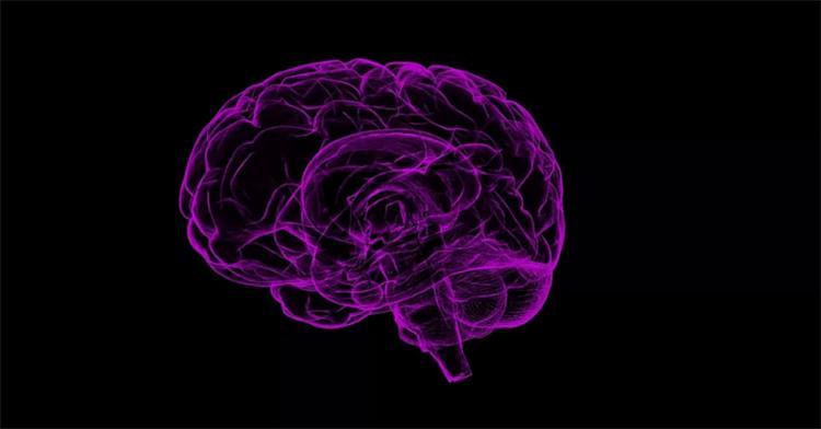 Nova técnica facilita a contagem de vasos sanguíneos no cérebro e deve aumentar a eficácia de pesquisas - Foto: Divulgação l Pixabay