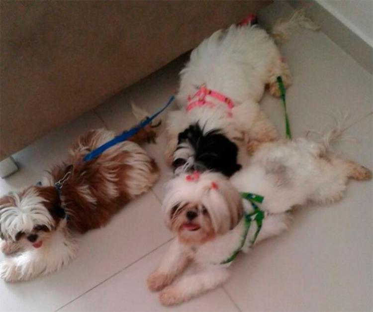 Cães foram achados e recuperados - Foto: Reprodução