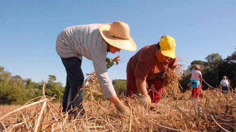 Mudança pode garantir aposentadoria diferenciada para trabalhador rural - Foto: Reprodução | ANPr