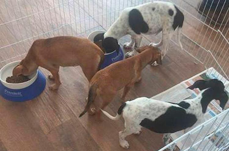 Todos os pets colocados para adoção estarão castrados, vacinados e vermifugados - Foto: Divulgação