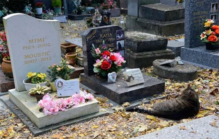 Projeto de cemitério já foi aprovado na Câmara - Foto: Bertrand Guay | AFP