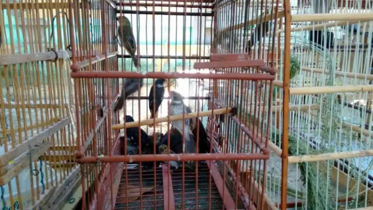 Aves são principal alvo do tráfico de animais silvestres - Foto: Divulgação   PM