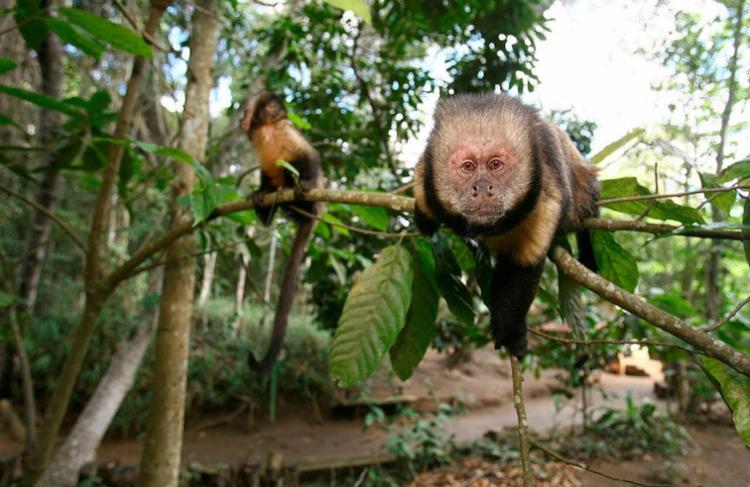 Também foram identificados macacos contaminados em Alagoinhas - Foto: Joá Souza | Ag. A Tarde