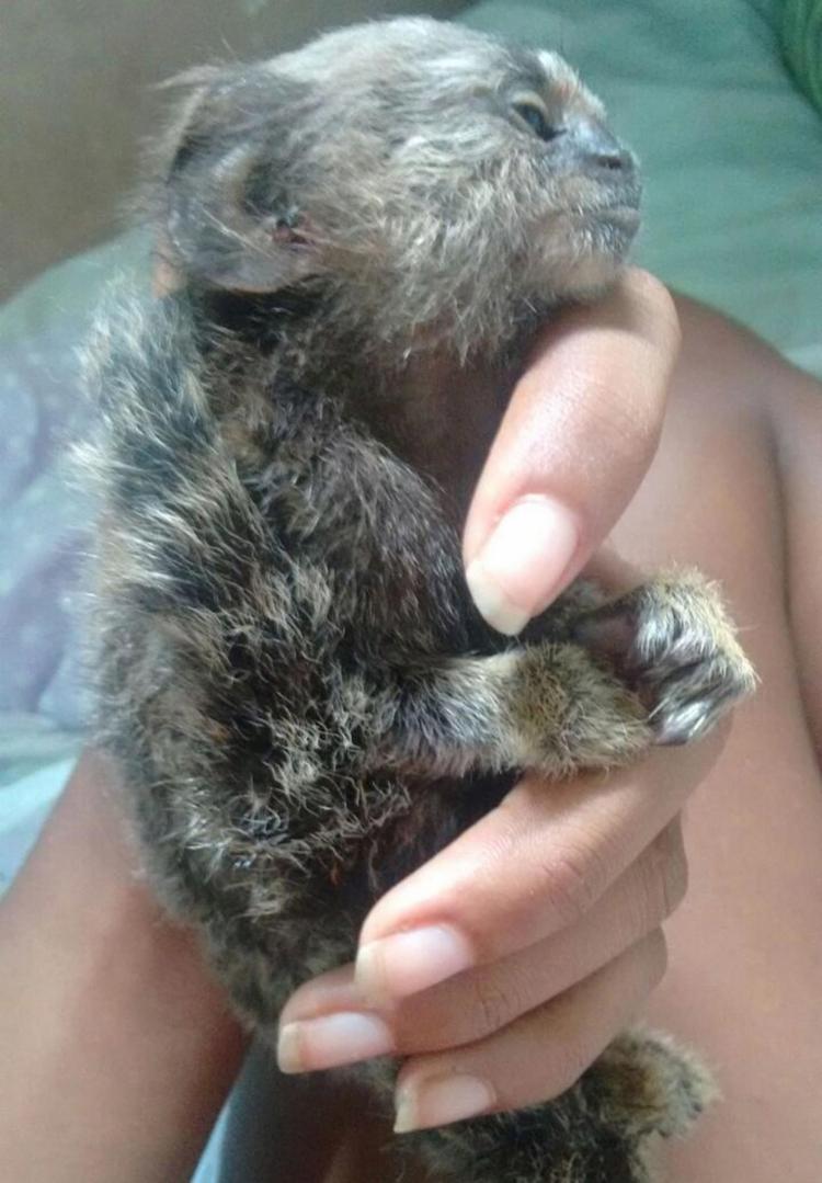 Macaco encontrado morto, último dia 9, na Vila Laura - Foto: Acervo pessoal