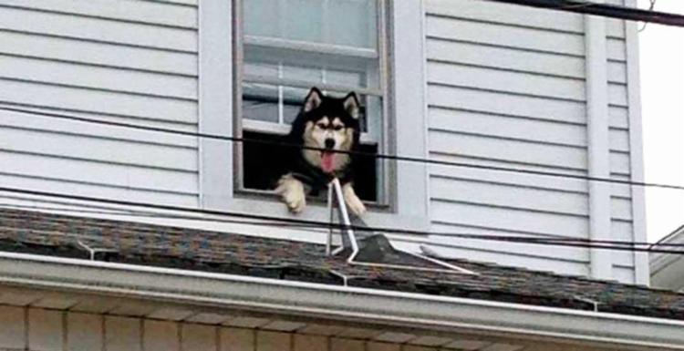 Cão conseguiu abrir janela e escapar para telhado - Foto: Reprodução | Nanticoke City Fire Department | Twitter