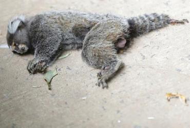Macaco é encontrado morto no bairro do Itaigara
