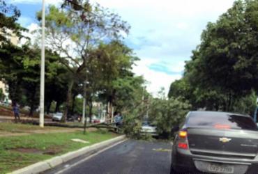 Árvore que atingiu veículo na Garibaldi é retirada