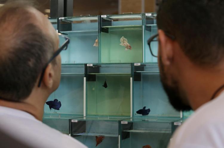 A exposição fica até domningo, 13h - Foto: Adilton Venegeroles | Ag. A TARDE
