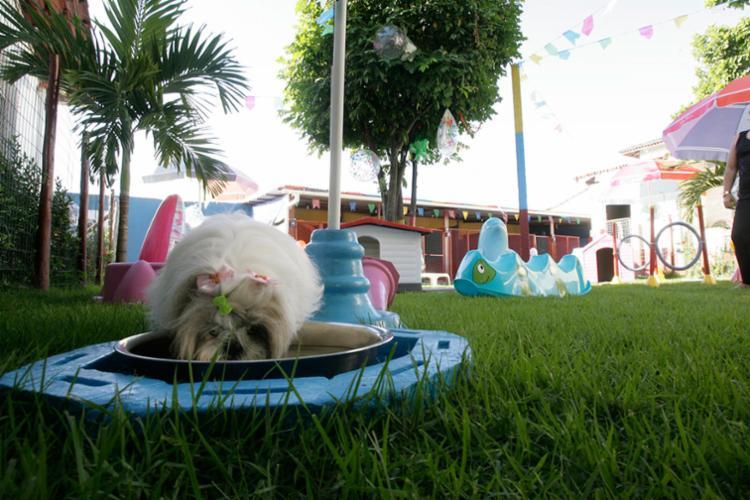 Hotel Cabrália inova ao deixar os animais soltos, brincando - Foto: Mila Cordeiro | Ag. A TARDE