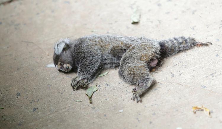 Animal foi encontrado morto na rua Doutor Antônio Monteiro - Foto: Xando Pereira | Ag. A TARDE