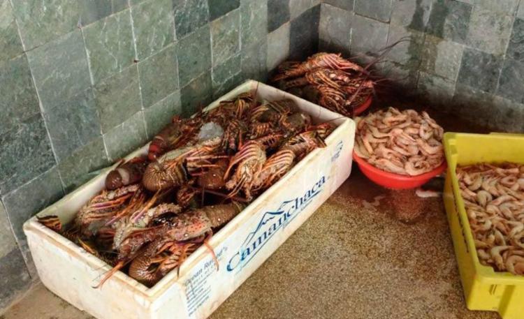 A pesca de lagosta está proibida até o fim de maio - Foto: Divulgação | SSP