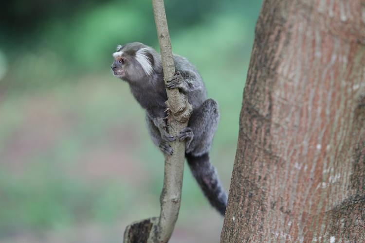 Segundo a Secretaria Municipal de Saúde, um macaco foi achado morto dentro de uma casa - Foto: Adilton Venegeroles l Ag. A TARDE l 18.04.2017