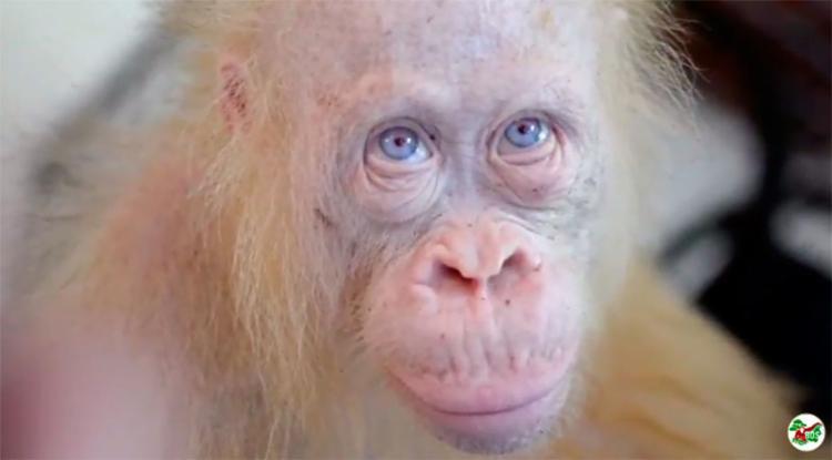 Alba é albina e tem cerca de 5 anos - Foto: Reprodução | YouTube