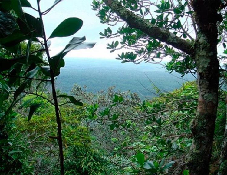Polícia Federal suspeita da extração ilegal de madeira em Parque Nacional - Foto: Divulgação