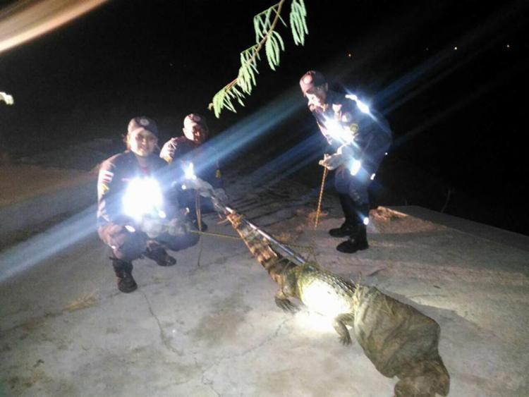 Após ser capturado animal foi devolvido à natureza - Foto: Reprodução | Facebook