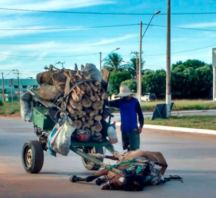 O caso aconteceu no município de Luís Eduardo Magalhães, na Bahia - Foto: Reprodução   Blog do Sigi Vilares