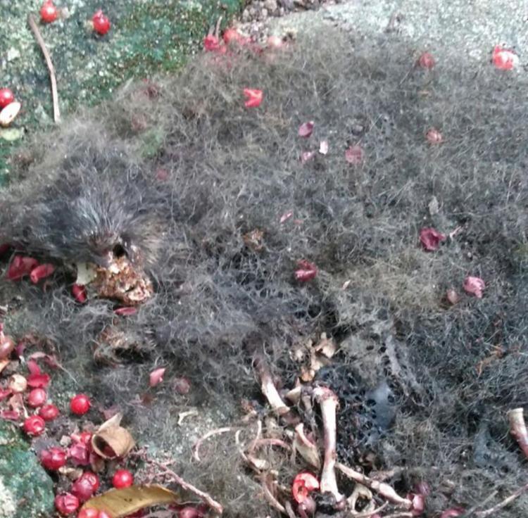 Restos mortais do animal encontrados nesta quarta-feira - Foto: Arquivo Pessoal