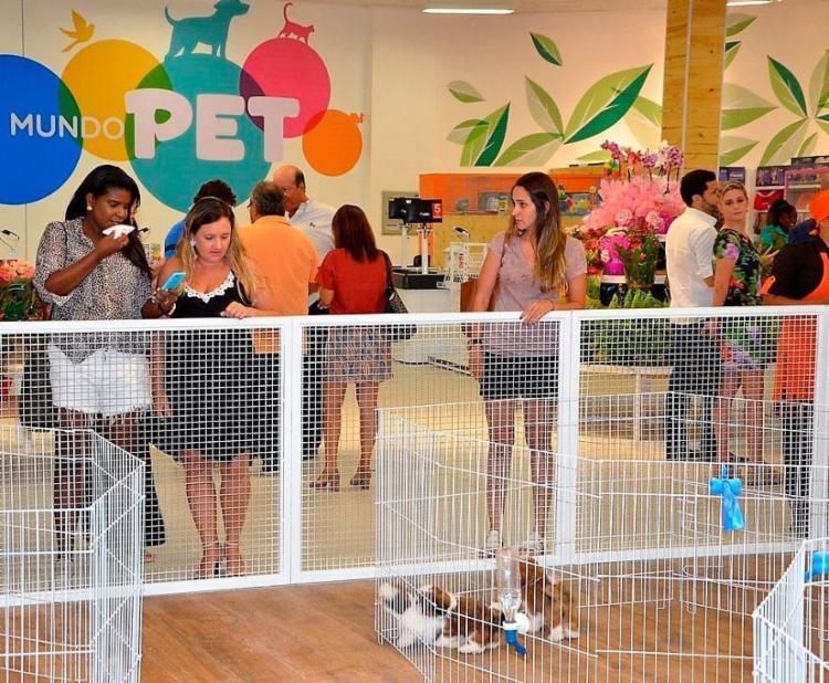 Serão 20 animais disponíveis para adoção - Foto: Kin Kin | Divulgação