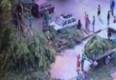 Árvore cai e bloqueia uma das vias da avenida Gal Costa | Foto:
